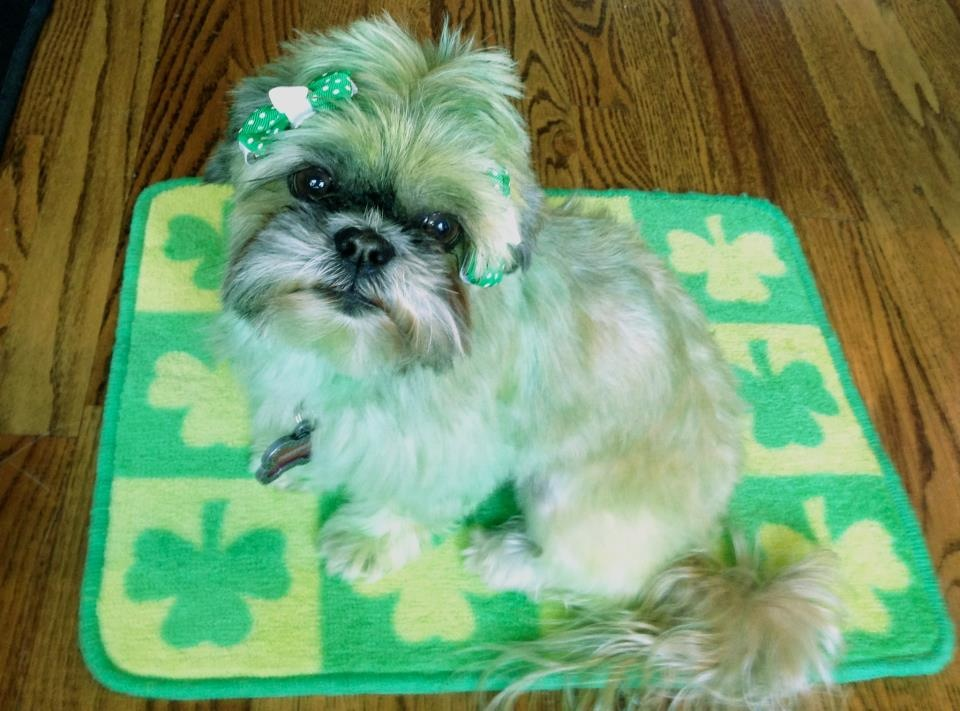 St Patrick Day Activities: color your pet